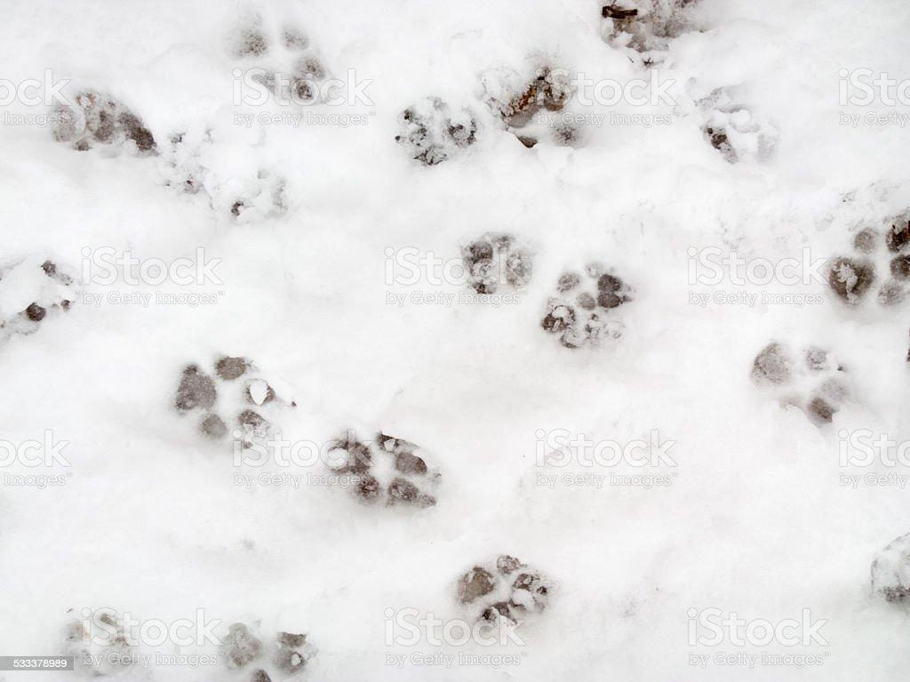 Animal tracks. stock photo