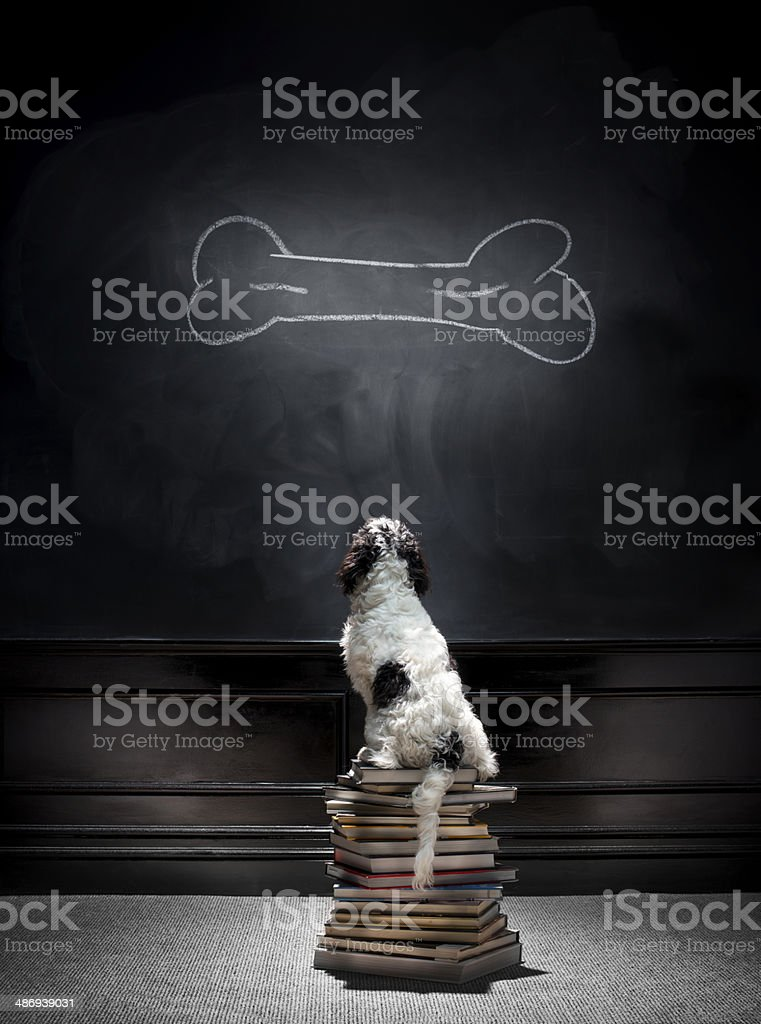 animal training stock photo