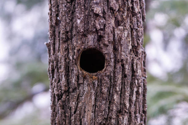 Animal Tree Hole stock photo