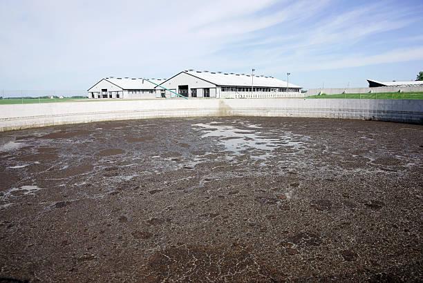 os resíduos animais lagoon em uma fazenda de gado leiteiro moderno - laguna - fotografias e filmes do acervo