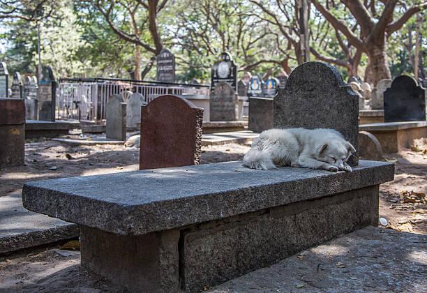 Animal_dog_grave – Foto