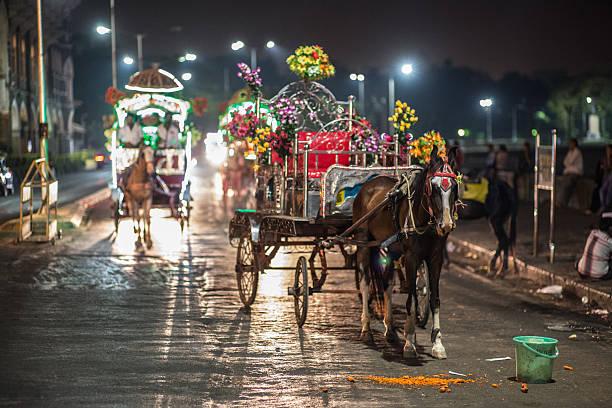 Animal_mumbai_horse – Foto