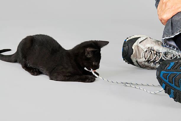 Animals active black kitten playing with shoe string picture id184394346?b=1&k=6&m=184394346&s=612x612&w=0&h=vhgiydd9xmw2smtkqn0dl0rtuakg0ifrl 2afhrgbfq=