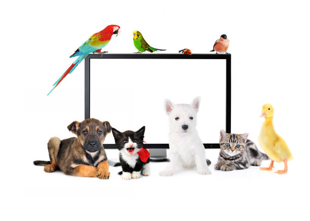 Animals and birds picture id928222080?b=1&k=6&m=928222080&s=612x612&w=0&h=ug pqbcbxs3upqy4pf 0qbe1jgn6 4jirppqskrddpe=