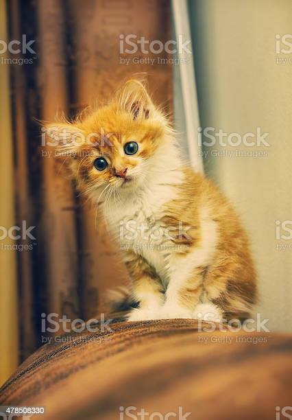 Animals at home cute red cute little baby cat pet picture id478508330?b=1&k=6&m=478508330&s=612x612&h=ob4v nngubw9uvelnkkrnllh iwhwir7g6r0s zihs4=