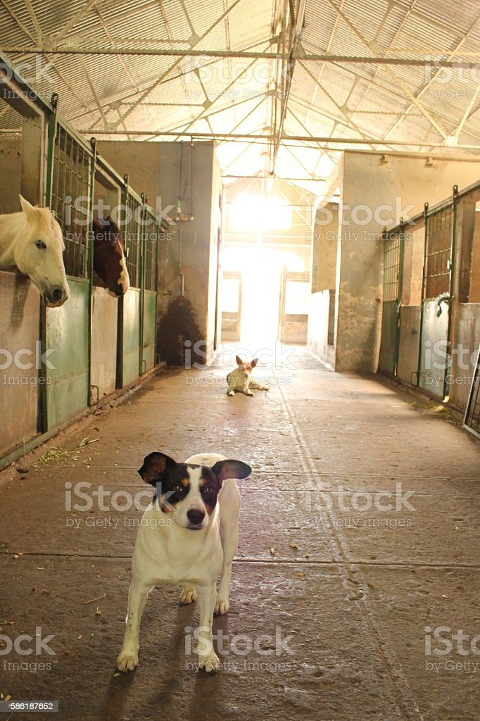 Animals at the barn stock photo