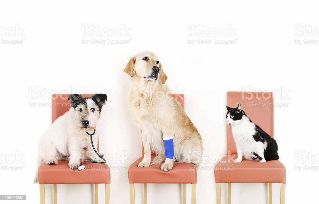 Animals at the Vet stock photo