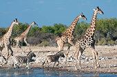 istock Animals at watering hole in Etosha 1265668688