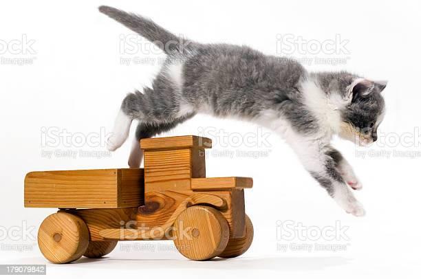 Animals baby cats picture id179079842?b=1&k=6&m=179079842&s=612x612&h=mhtvrw52ihq65fyh6976q00jkfdwuckfc0 dnkem5l8=