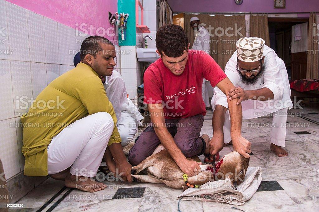 Animaux sacrifiés à mark Eid El-Adha. - Photo