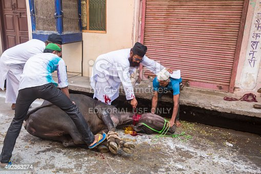 istock Animals being sacrificed to mark Eid Ul-Adha. 492363274