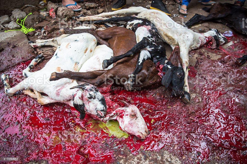 Animais sacrificadas à mark Eid Ul-Adha. - foto de acervo
