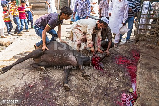 istock Animals being sacrificed to mark Eid Ul-Adha. 517504471