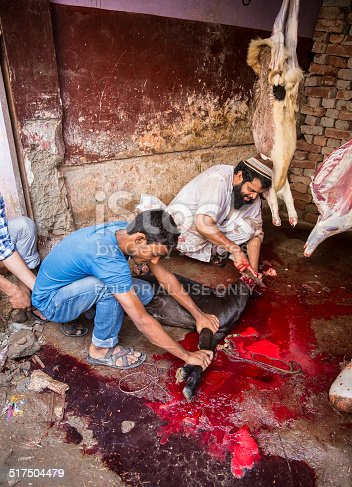 istock Animals being sacrificed to mark Eid Ul-Adha. 517504479