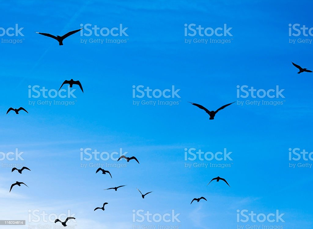 Seagulls flying in your direction