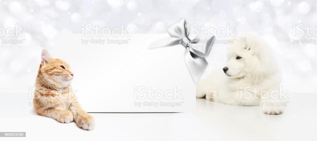 animals christmas theme, cat and dog with gift card and silver satin ribbon bow stock photo