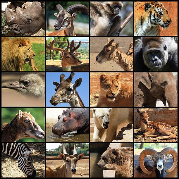 Animals Collage Stock Photo