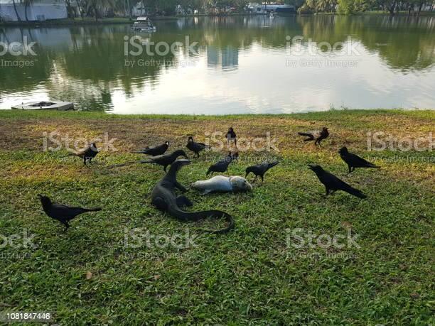Animals eat food picture id1081847446?b=1&k=6&m=1081847446&s=612x612&h=o4prurpq0v1ztzeeg5iqi yqfjbcaqbq5madf ueb u=