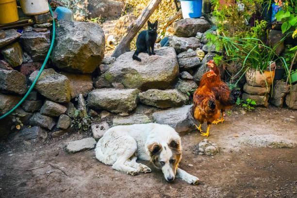 Animals family picture id663471414?b=1&k=6&m=663471414&s=612x612&w=0&h=8kfttwnkfvi 8s24shkre0jumlcbtpcjt5ttmsjc9ow=