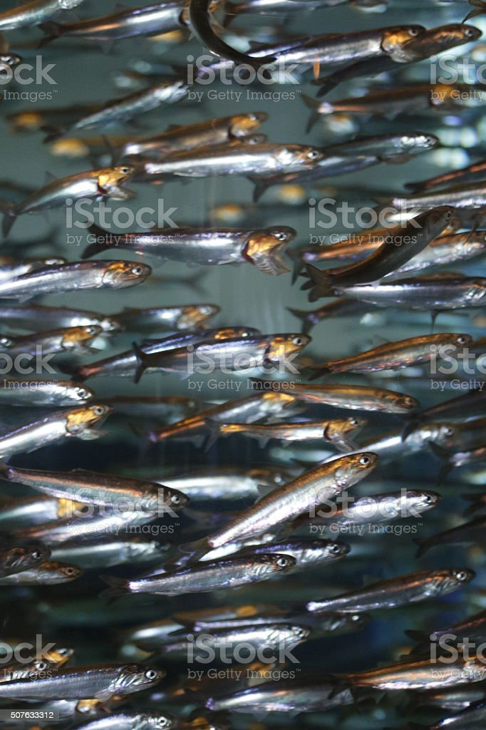 Animals: fish swimming stock photo