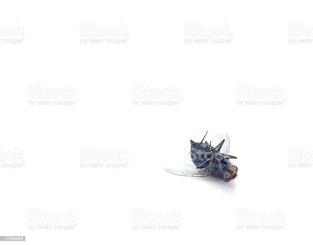 Animals - Fly Dead Close Up royalty-free stock photo