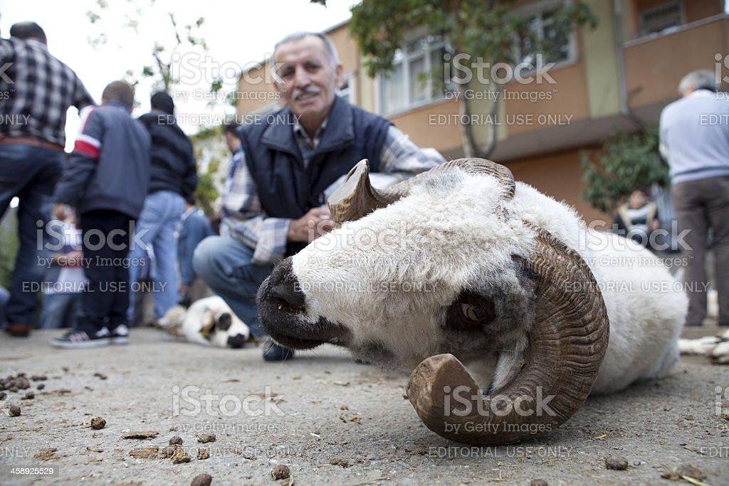 Animals for muslim festival of sacrifice stock photo