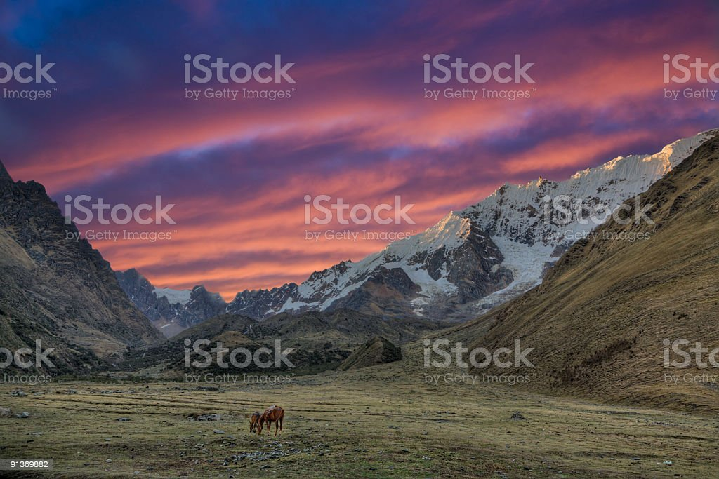 Animals grazing during the evening in the Andes royalty-free stock photo