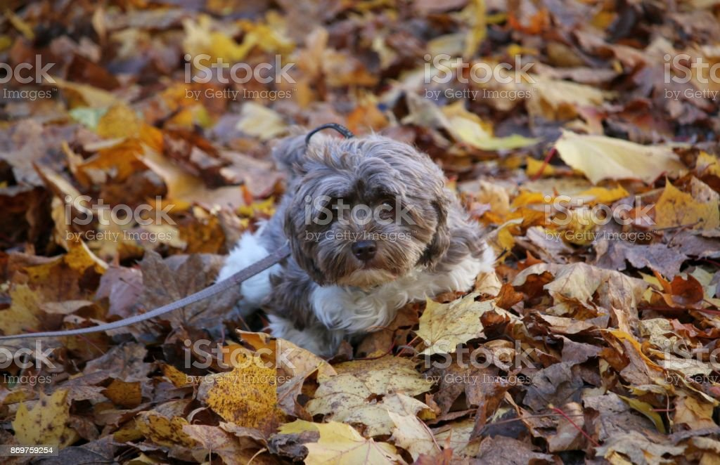 Animals in autumn leaves stock photo