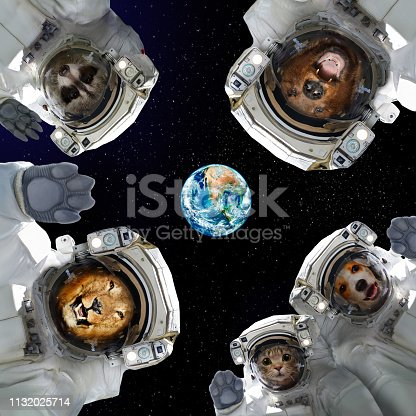 istock Animals in space suits in space on the background of the planet Earth 1132025714