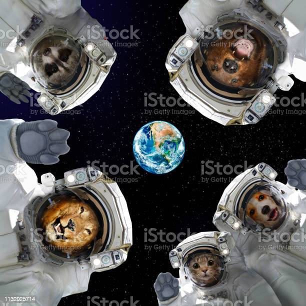 Animals in space suits in space on the background of the planet earth picture id1132025714?b=1&k=6&m=1132025714&s=612x612&h=nfae73j09buxncxddlrf98lpqdjnzofrcf5ojufbtwg=