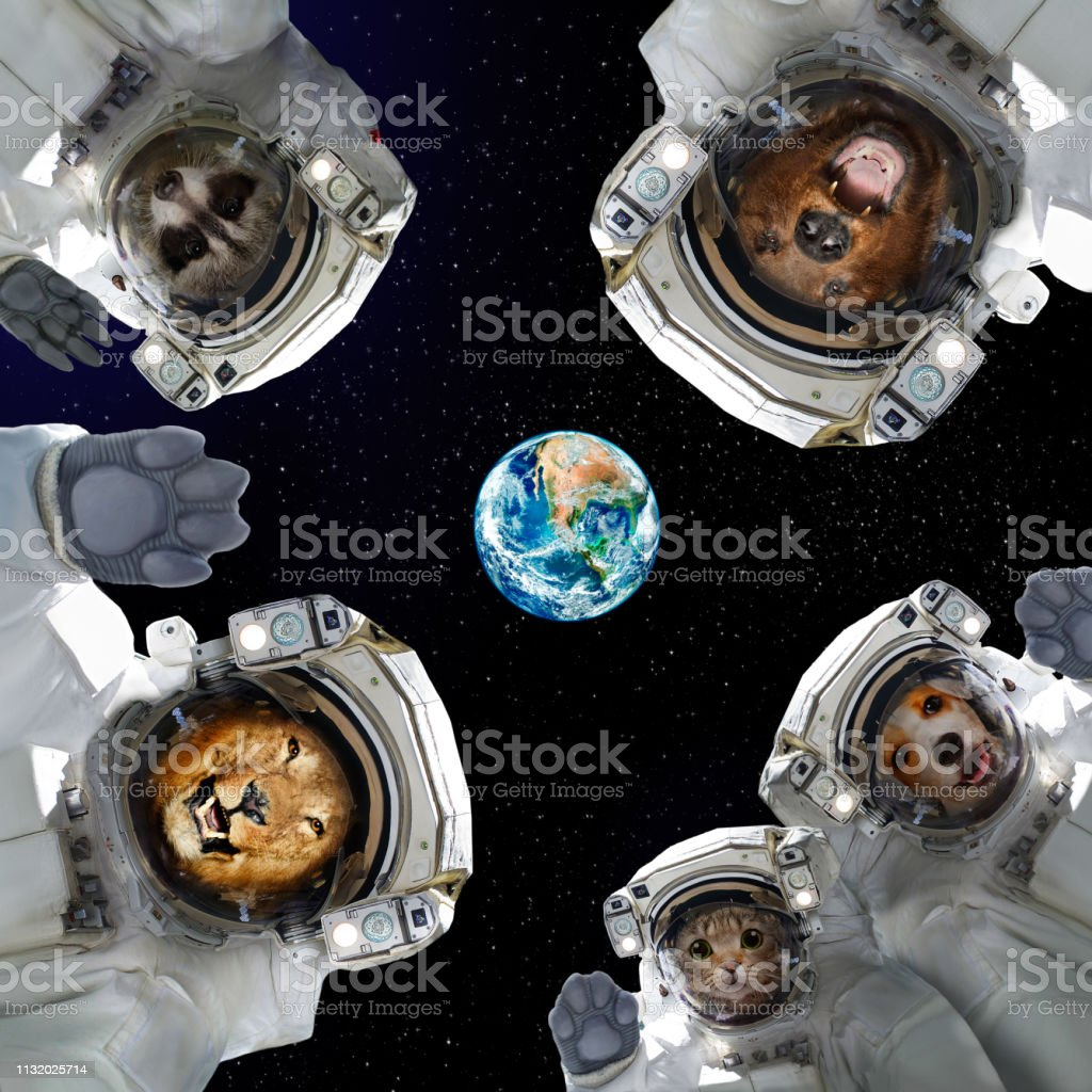 Animals in space suits in space on the background of the planet Earth stock photo