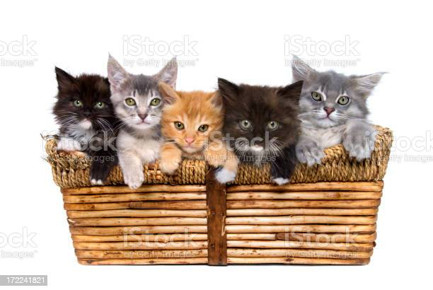 Animals isolated kittens in basket picture id172241821?b=1&k=6&m=172241821&s=612x612&h=o t027 pibdmdz6uiw662zfvkivwzw10fn8bsdnw4 y=
