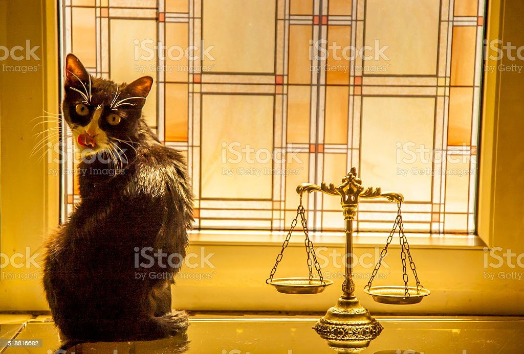 Animals law and justice stock photo
