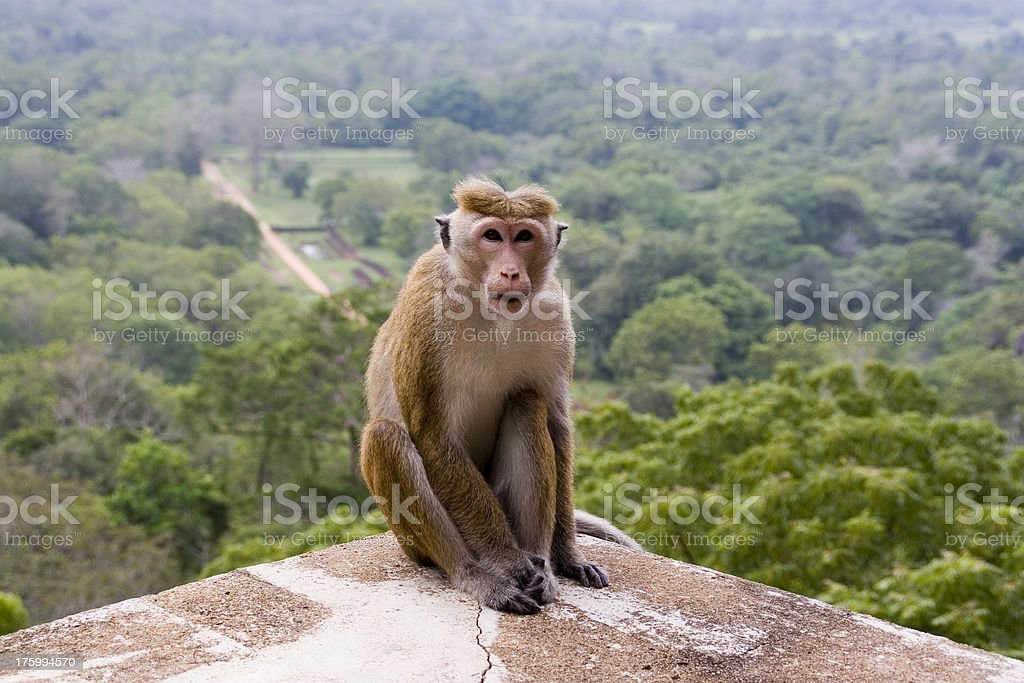 Animals: Monkey stock photo