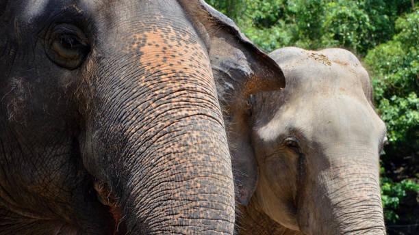 Animals of Bangkok Thailand stock photo