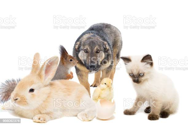 Animals on a white background picture id956062376?b=1&k=6&m=956062376&s=612x612&h=koil4rrbnxddq5juegnxirimmss8x4w0y87ye qwfpe=