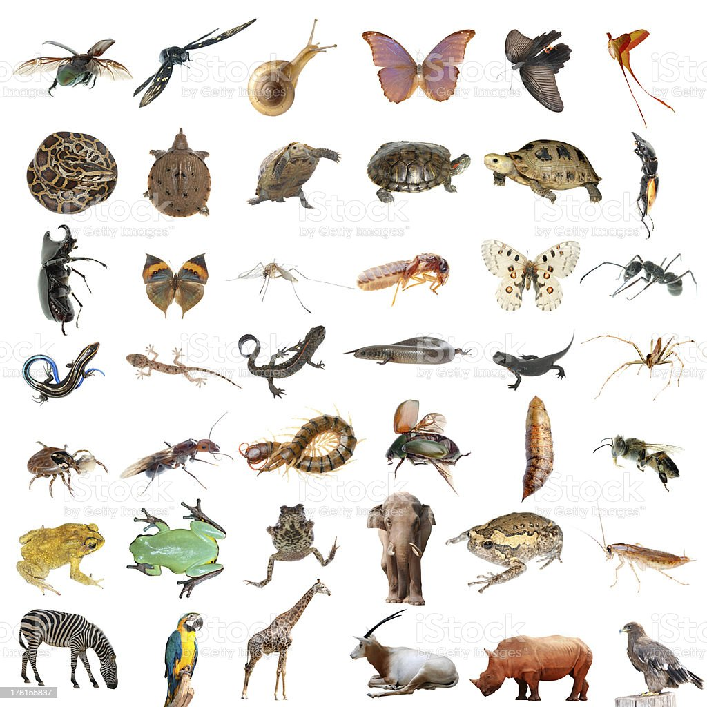 animals stock photo