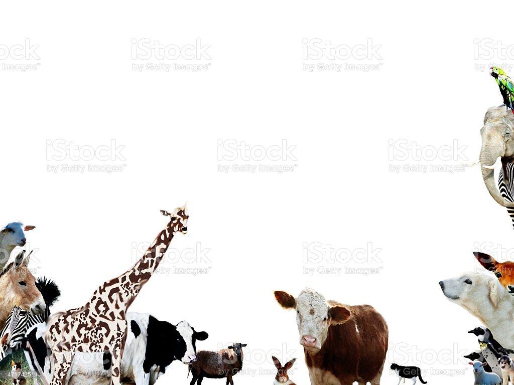 Tiere – Foto