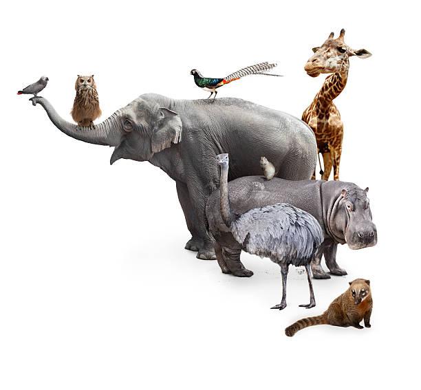 Los animales - foto de stock
