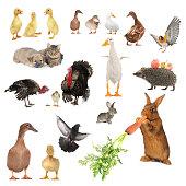 istock animals 535898399