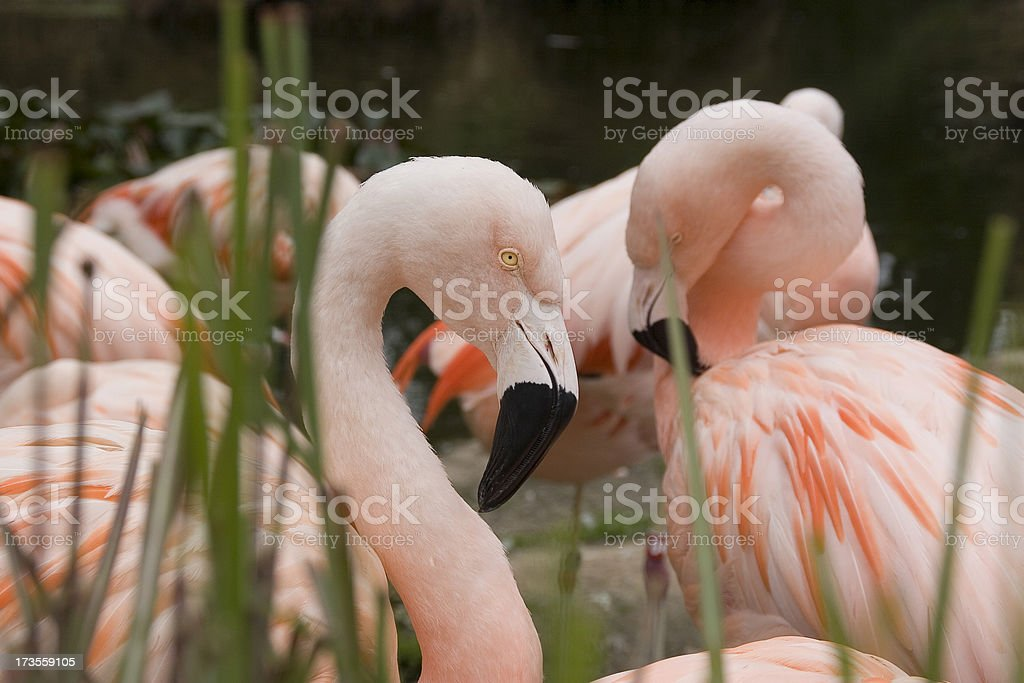 Pink Flamingos.Check out my other