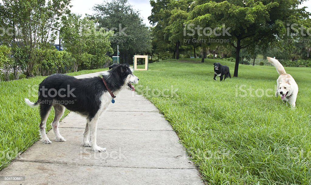 Animals Playing At Dog Park In Summer stock photo