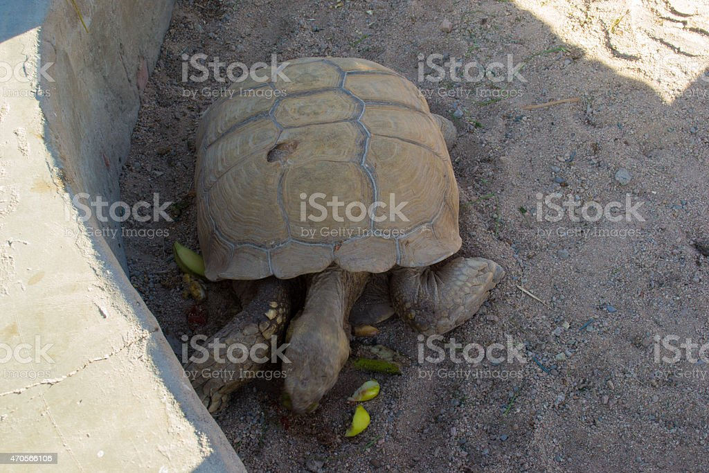pets animals reptiles reptile animal turtle isolated beauty
