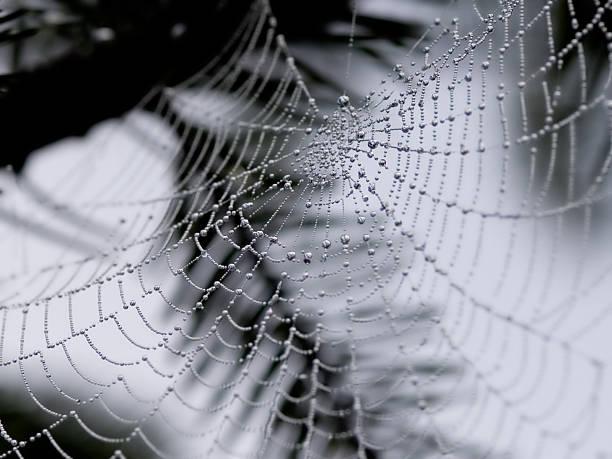Animals - Spider Web stock photo