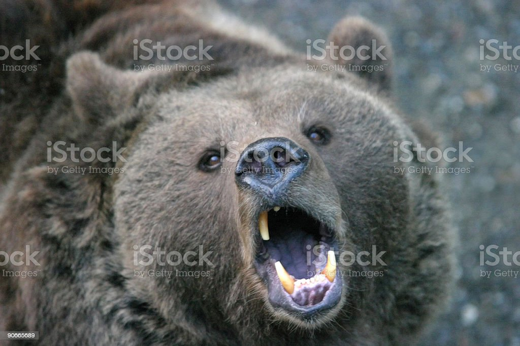 Animals - Too close for comfort #3 stock photo