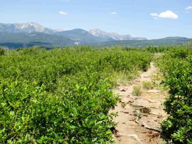 Animas Mountain trail in Durango, Colorado Animas Mountain trail through scrub oak with distant mountains in Durango, Colorado animas river stock pictures, royalty-free photos & images