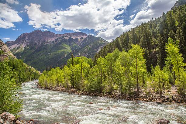 Animas River in Colorado Animas River in Colorado, United States animas river stock pictures, royalty-free photos & images