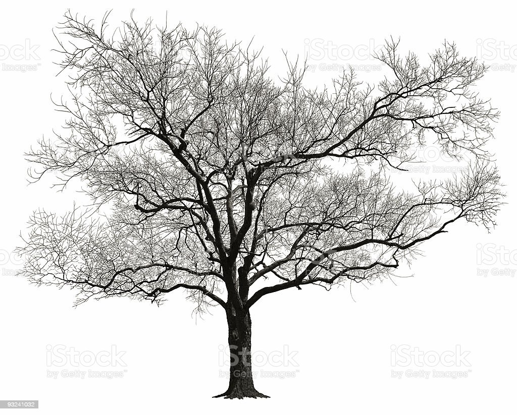 Animated illustration of older tree and gray leaves stock photo