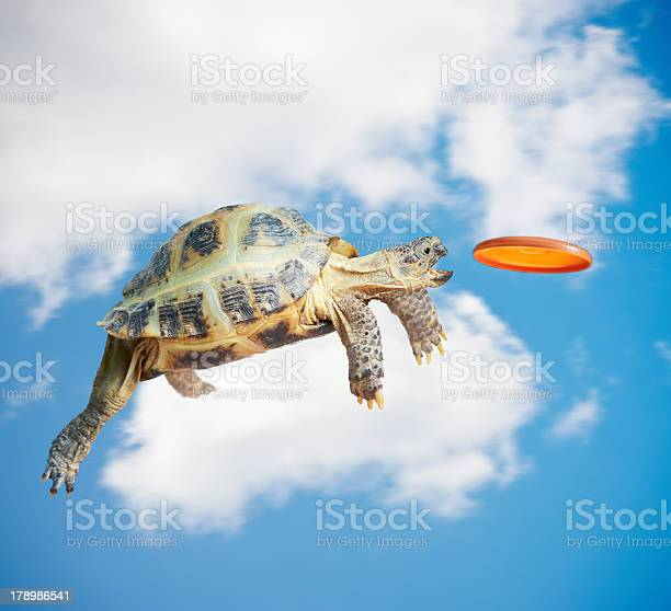 Animation of turtle catching frisbee in mid air picture id178986541?b=1&k=6&m=178986541&s=612x612&h=xsjp8n2akch7a8fyrufrfc4wdoln3jdpf16ij5cs5ug=