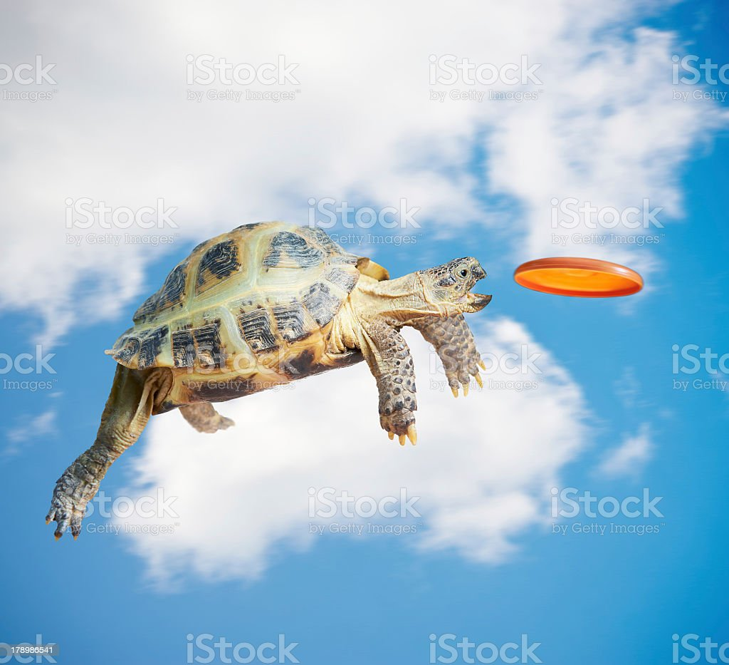 Animation of turtle catching frisbee in mid air stock photo